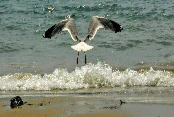 Le ali della libertà tra cielo e mare