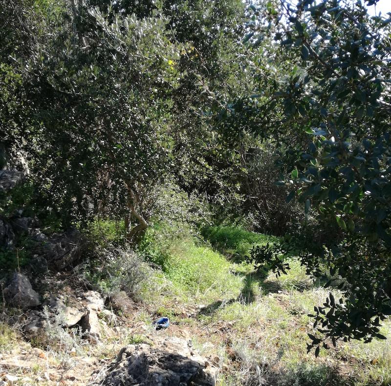 Sentiero - Lama Balice - Sicurezza per l'accesso al Parco