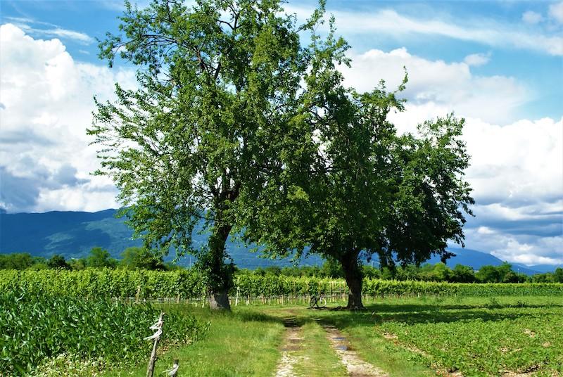 """""""Il momento migliore per piantare un albero è vent'anni fa. Il secondo momento migliore è adesso."""" Confucio"""
