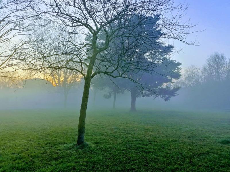 Albero della nebbia