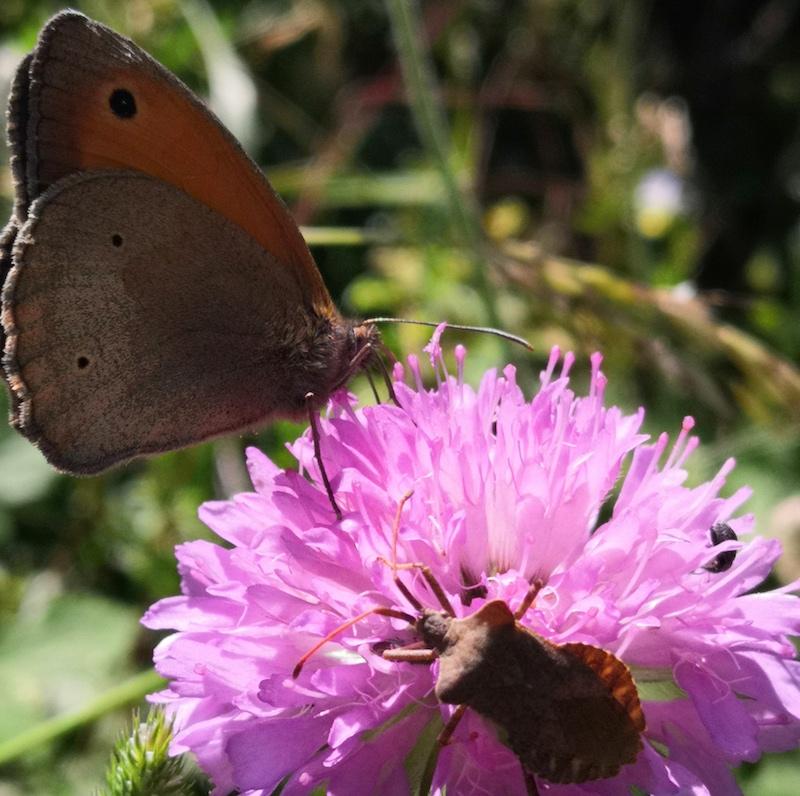 Ali di farfalla