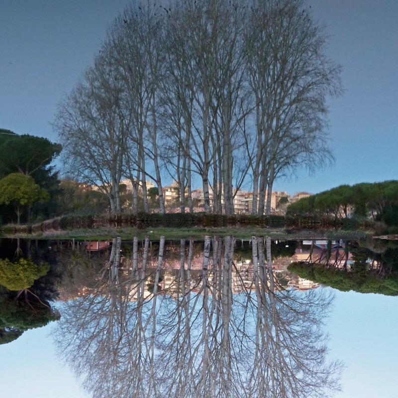 Riflessioni invernali: Populus alba a Villa Ada