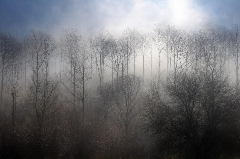 Tra le nebbie dei Pratoni del Vivaro (Velletri - RM)
