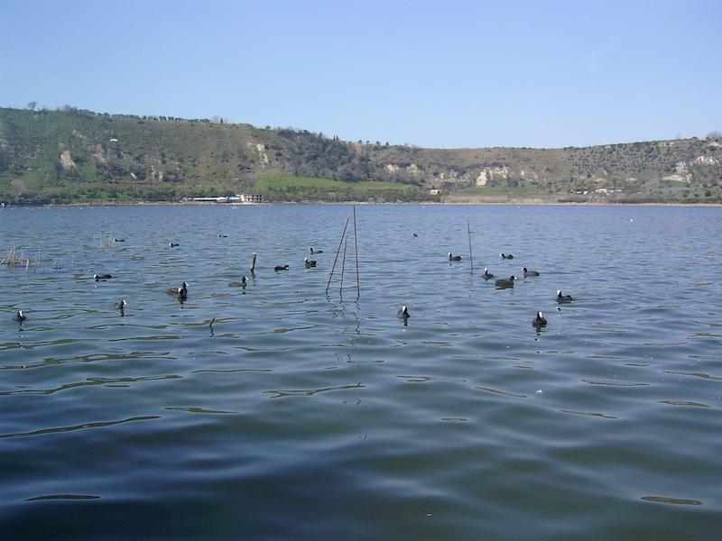 Il lago d'Averno nel Parco Regionale dei Campi Flegrei, veduta con folaghe