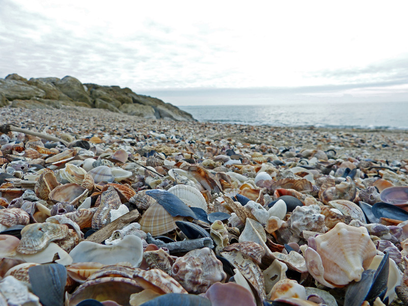 Un mare di... conchiglie! Spiaggia con elevata componente biogenica a Marina di San Nicola