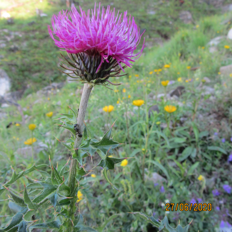 La biodiversità ispira la creatività (Foto 3)
