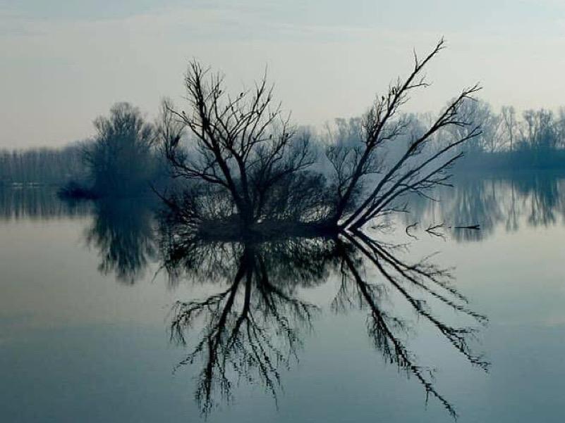 Il cielo capovolto - Lago superiore, Parco del Mincio