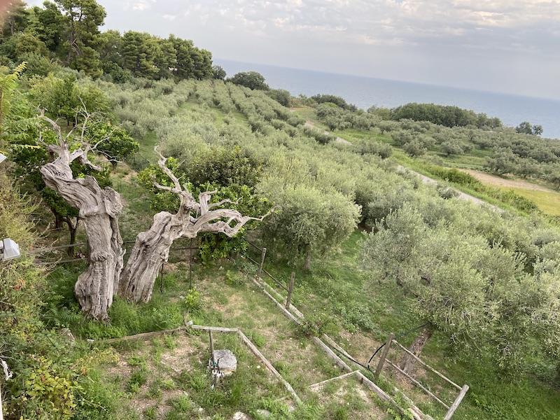 Terra di olivi e ... olio