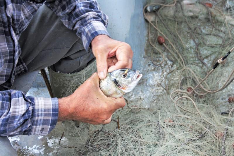 Pesca sostenibile?