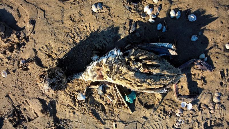morte sulla spiaggia di rimini