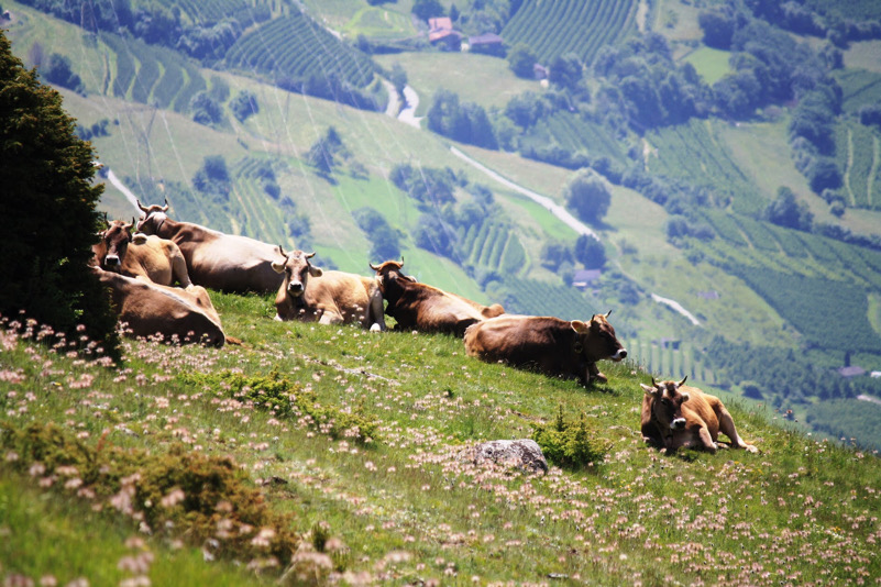 Val Mazia