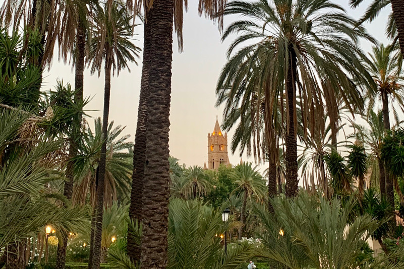 Palermo - un palmeto in città, come una volta