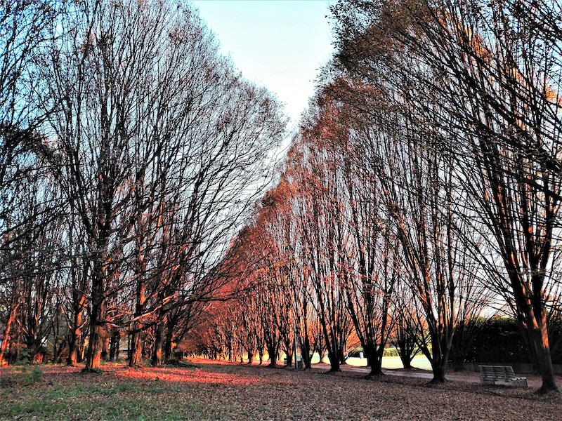 """Parco Albanese_""""Amo gli alberi. Sono come noi. Radici per terra e testa verso il cielo"""". Erri De Luca"""