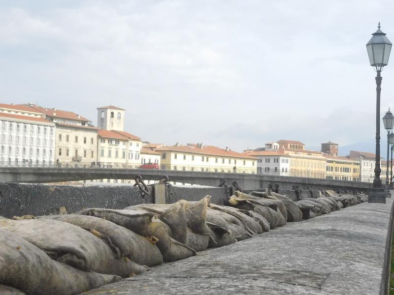 Funghi sui sacchi di sabbia a difesa per la piena dell'Arno a Pisa