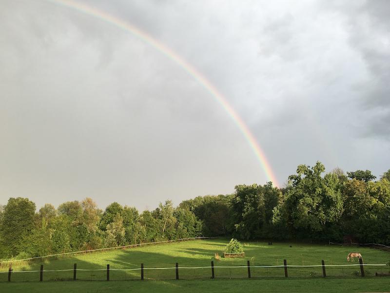 E se anche i cavalli amassero gli arcobaleni?