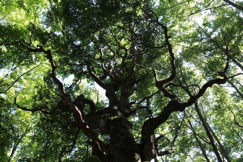 I grandi alberi, condomini di biodiversità