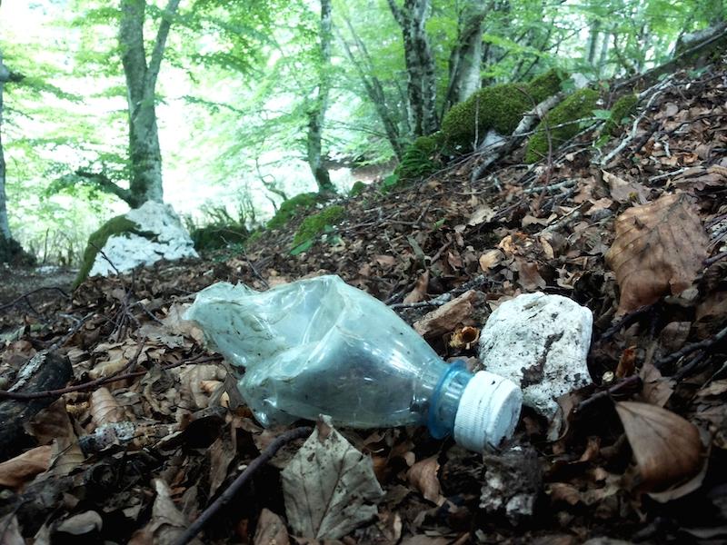 Plastica in faggeta - Monti Lucretili