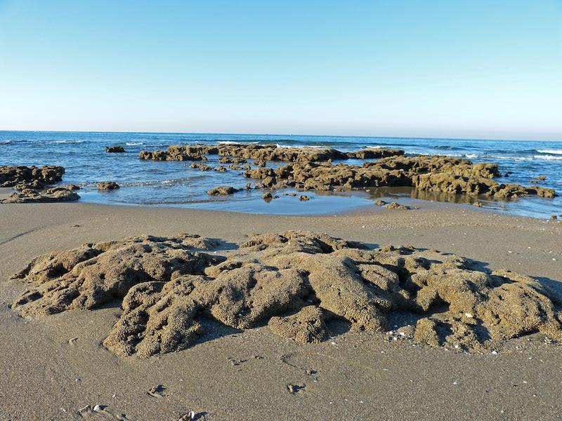 Tor Caldara come Mont Saint-Michel grazie al reef a Sabellaria alveolata