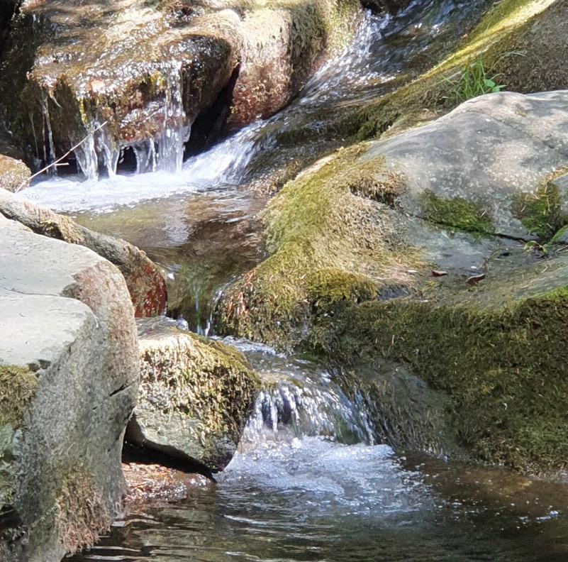 """""""Chiare fresche dolci acque"""" - Camaldoli - Foreste Casentinesi"""