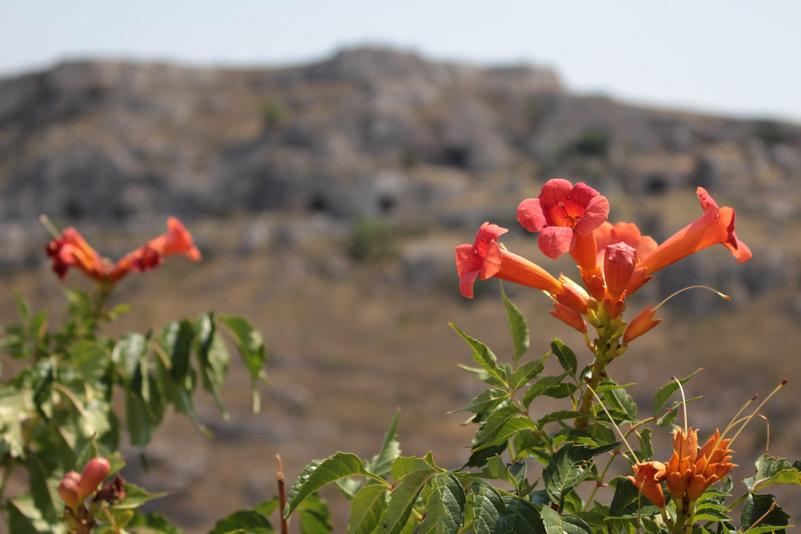 Sassi in fiore (Matera)