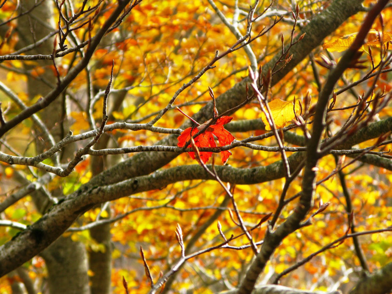 Be Leaves-Autunno a Forca d'Acero (Fr)