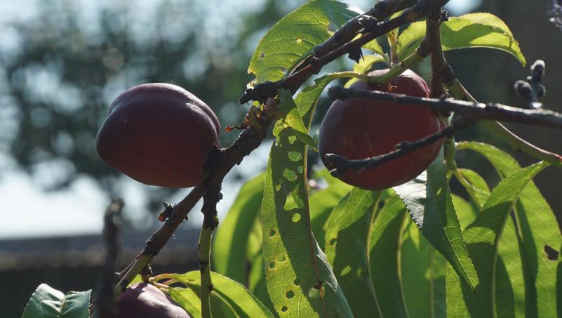 coltivando senza pesticidi