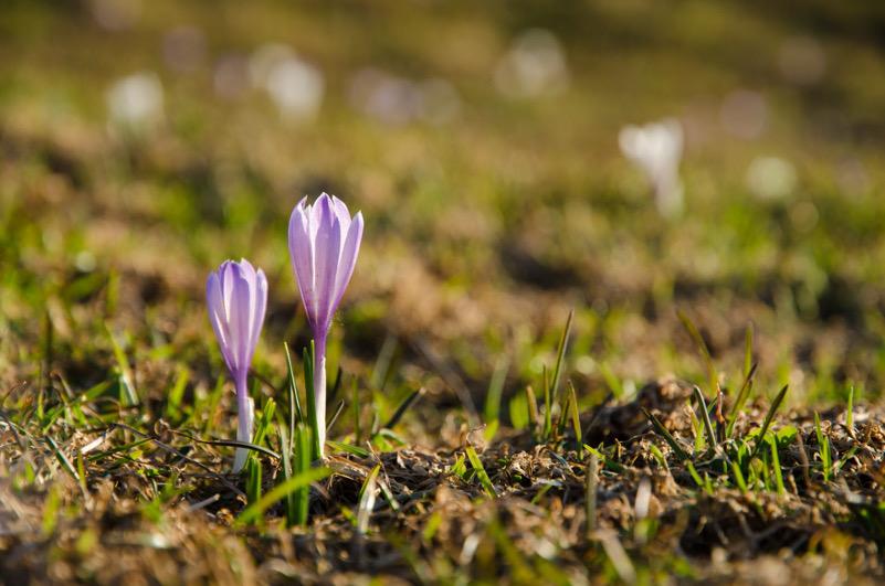 Spunta la primavera