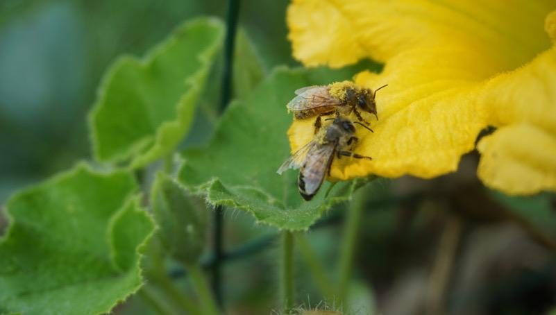 Alla ricerca dI polline