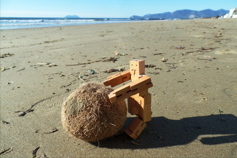 Saving the Poseidonia-spiaggia di Sperlonga