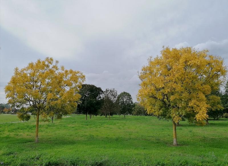 L'autunno nell'aria