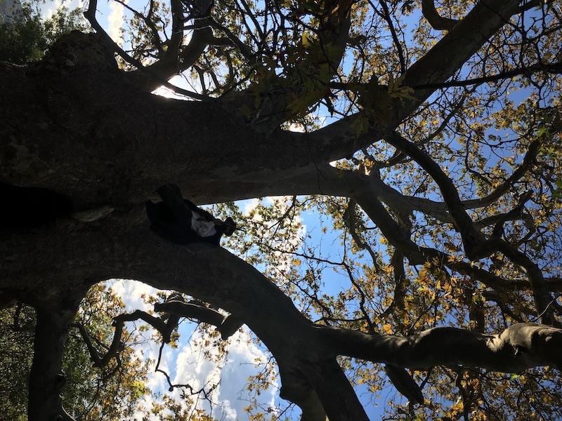 La forza della natura 500 anni dell'albero del Piccioni