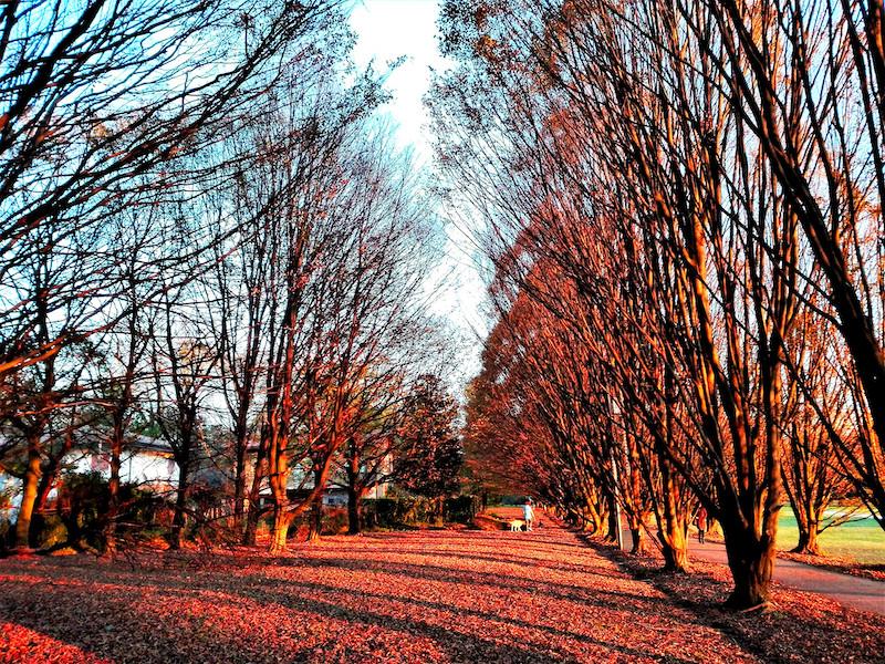 Amo gli alberi. Sono come noi. Radici per terra e testa verso il cielo (Erri de Luca)