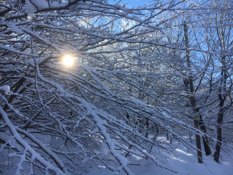Neve fra gli alberi