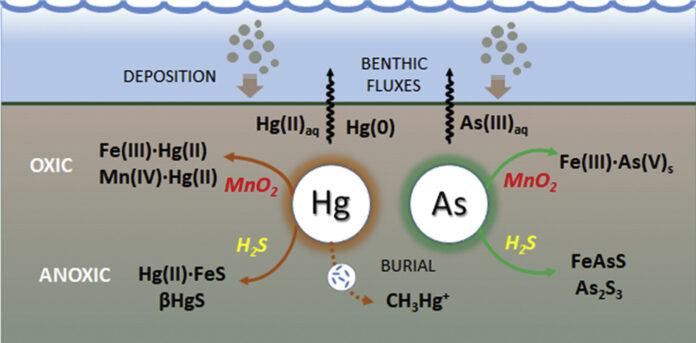 arsenico e mercurio nei sedimenti