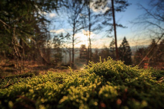 Muschi - ambiente - natura